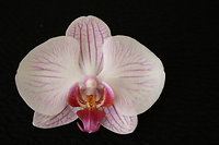 FAQ, Gift Vouchers and Prices. Orchid
